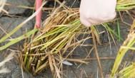 『宜蘭』梅花湖農業區一日遊懶人包、割稻碾米DIY、有機不老餐、梅花湖腳踏車輕鬆遊、小豬小羊任你餵!